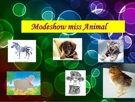 Modeshow miss Animal Welkom dames en heren op de modeshow miss animal!