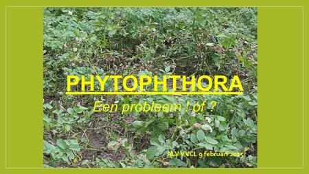 PHYTOPHTHORA Een probleem ! of ? ALV VVCL 9 februari 2015.