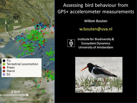 2 km Fly Terrestrial Locomotion Preen Stand Sit Assessing bird behaviour from GPS+ accelerometer measurements Willem Bouten Institute for.