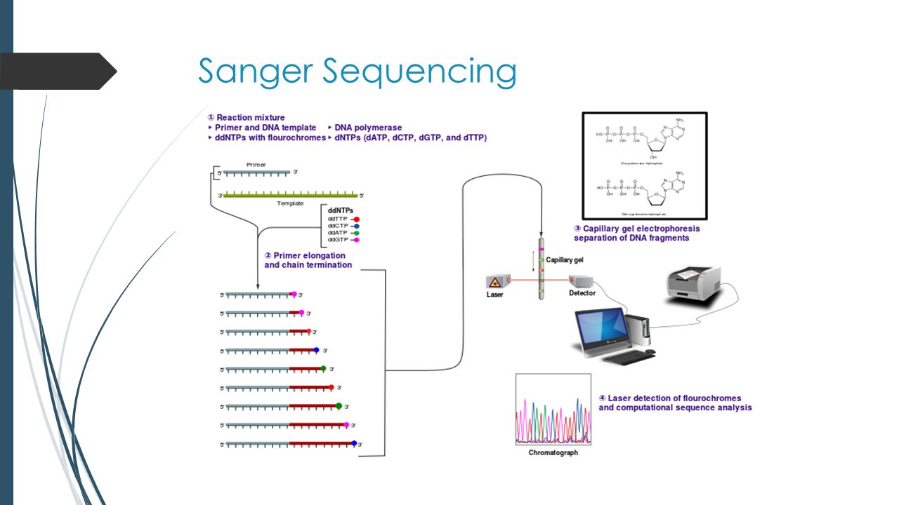 Next-generation Sequencing  Library Preparation  Cluster generation  Sequencing by synthesis
