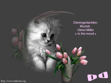 Dierengedachten. Muziek : Glenn Miller « In the mood »