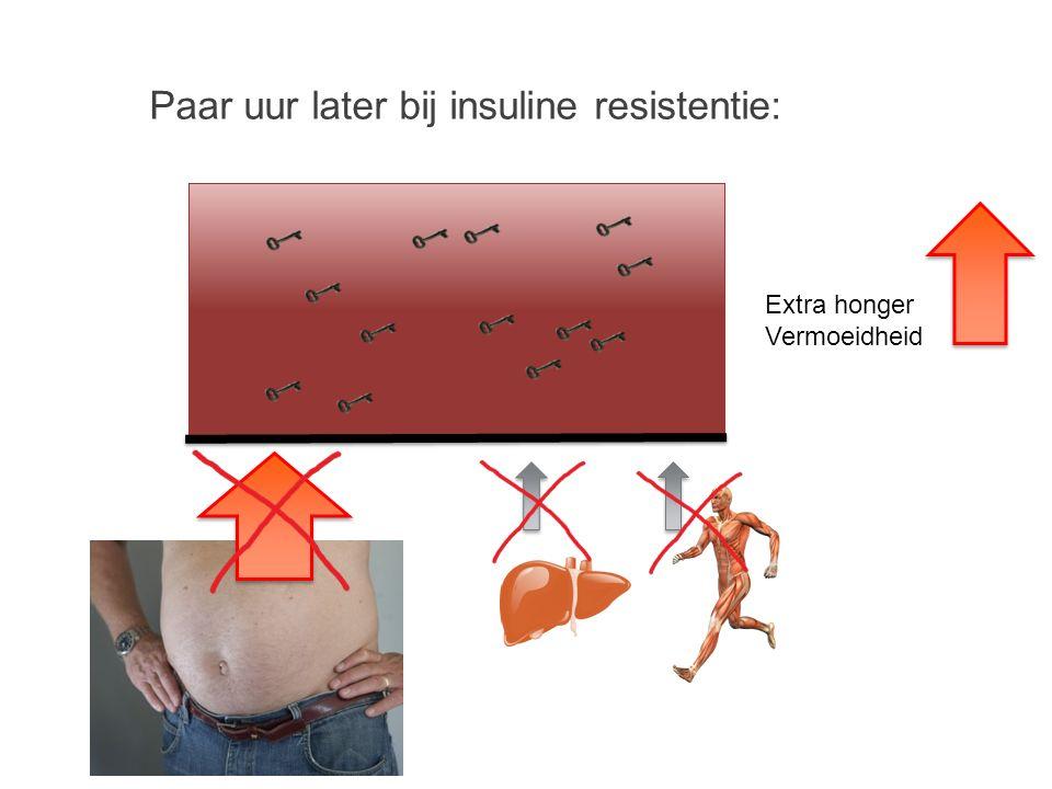 Verwerking van voedsel: Insuline Bloed glucose Maaltijd insuline