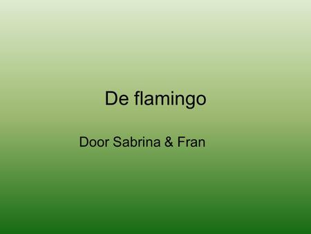 De flamingo Door Sabrina & Fran.