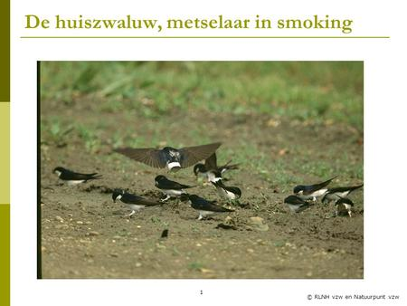 De huiszwaluw, metselaar in smoking