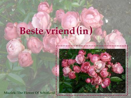 ( ) Beste vriend in Muziek: The Flower Of Schotland.