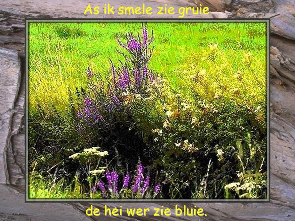 As ik smele zie gruie As ik smele zie gruie de hei wer zie bluie. de hei wer zie bluie.