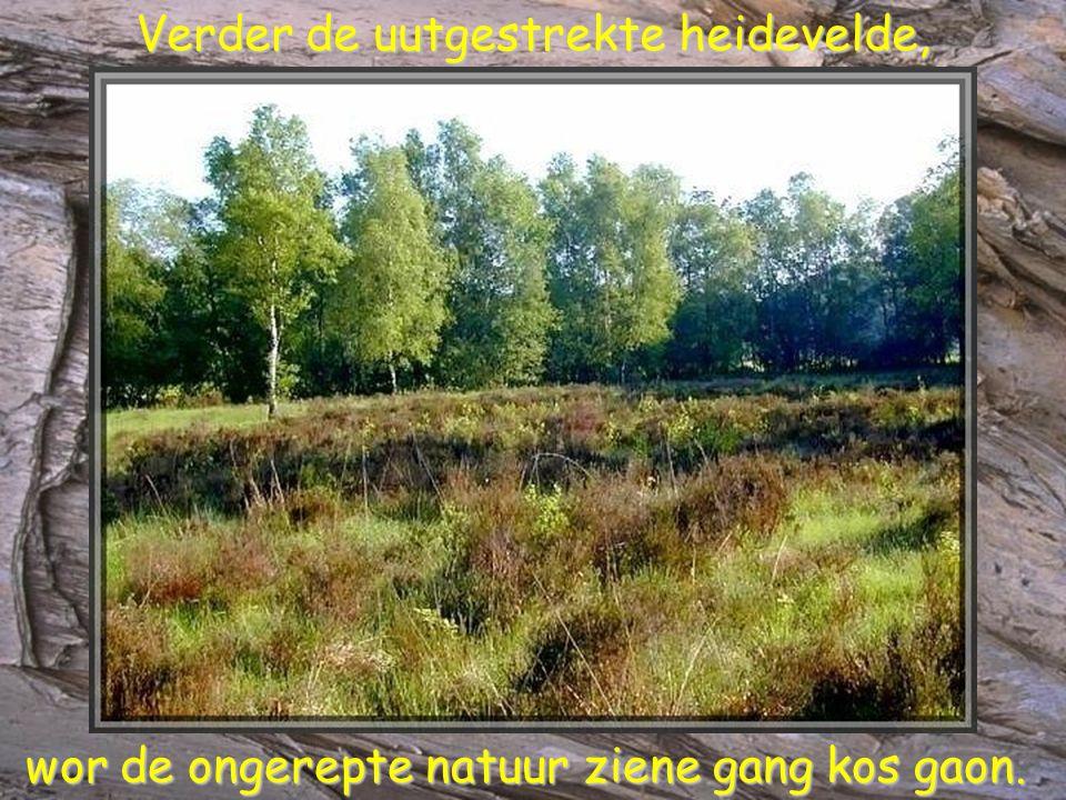Verder de uutgestrekte heidevelde, Verder de uutgestrekte heidevelde, wor de ongerepte natuur ziene gang kos gaon.