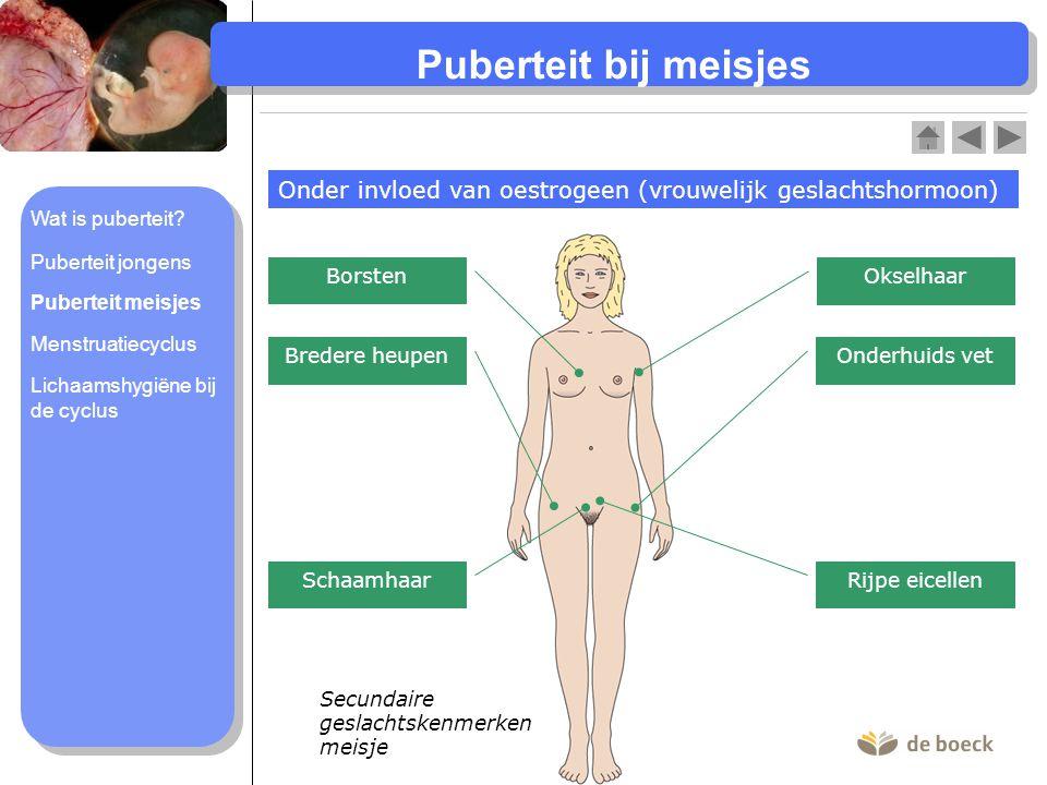 Menstruatiecyclus (1) Fase 1: menstruatie (+/- dag 1 tot 5) Vrouwelijk voortplantingsstelsel (schematisch) Afbrokkelend baarmoederslijmvlies •Baarmoederwandspieren trekken samen.