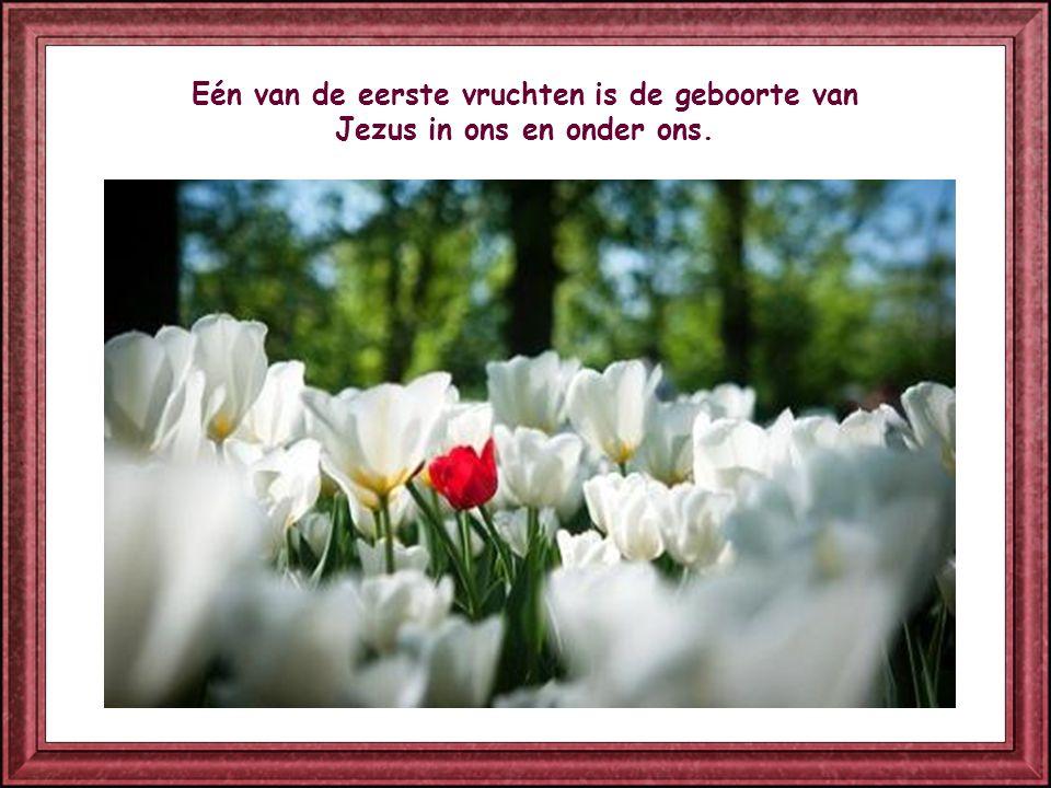 Eén van de eerste vruchten is de geboorte van Jezus in ons en onder ons.