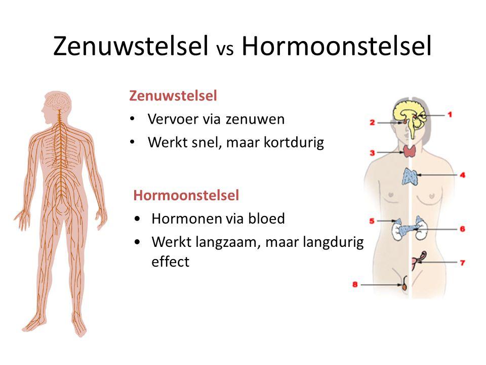 Zenuwstelsel Centrale zenuwstelsel (CZ): • Grote hersenen • Kleine hersenen • Hersenstam • Ruggenmerg Perifere zenuwstelsel: • Zenuwen (motorische en sensorische) Indeling op basis van ligging: