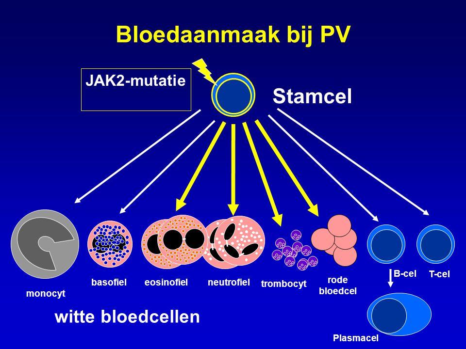 EPO A = inactieve situatie B = normaal, na contact met EPO of andere groeifactor receptor, 2 delen buiten de cel binnen de cel JAK2 A: Op cellen zitten receptoren, vaak in paren van twee.