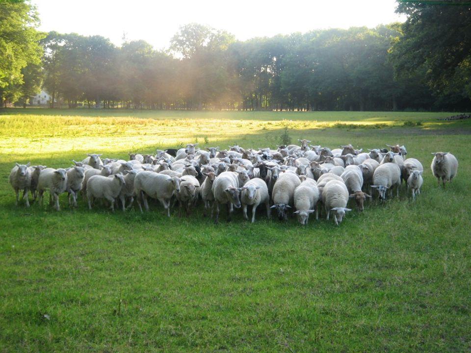 Landschapszorg ABL zet zich in voor het ecologisch beheer van landschappen en domeinen, hoofdzakelijk door begrazing met schapenkuddes en voor het organiseren van evenementen en projecten met schapen.