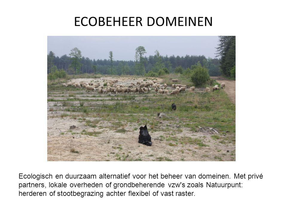 EDUCATIE Educatieve activiteiten met schapen, Border Collies en schapendrijven, gericht op scholen, groepen en verenigingen.