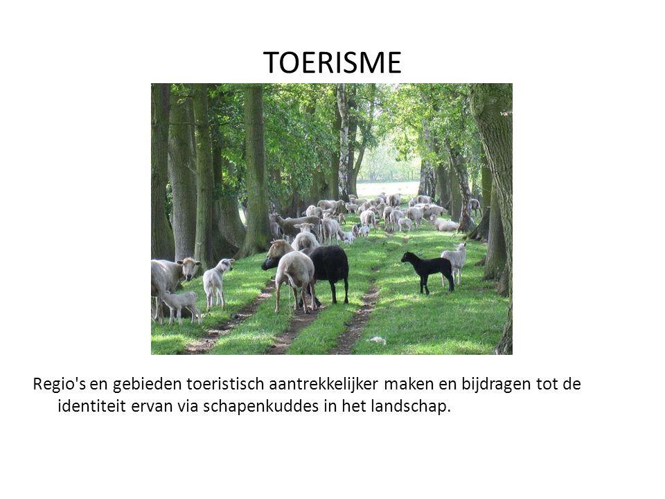 TOERISME Evenementen met schapen: demonstraties, trekken met de herder, lammerdagen, dag van het schaap, dag van de wol, wedstrijd schapendrijven...