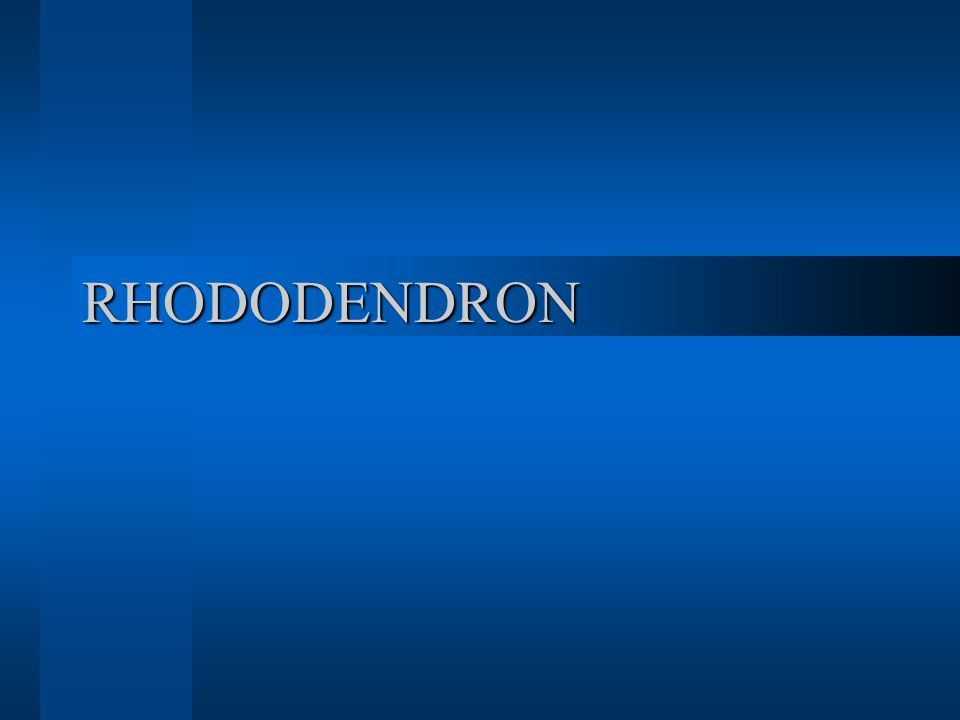 Genus: Rhododendron Species:  Rhododendron degronianum Subspecies:  Rhododendron degronianum ssp.