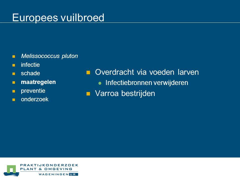 Europees vuilbroed Melissococcus pluton infectie schade maatregelen preventie onderzoek Goede dracht > spontane verdwijning Raten met aantasting verwijderen Broedloze periode zwermmethode