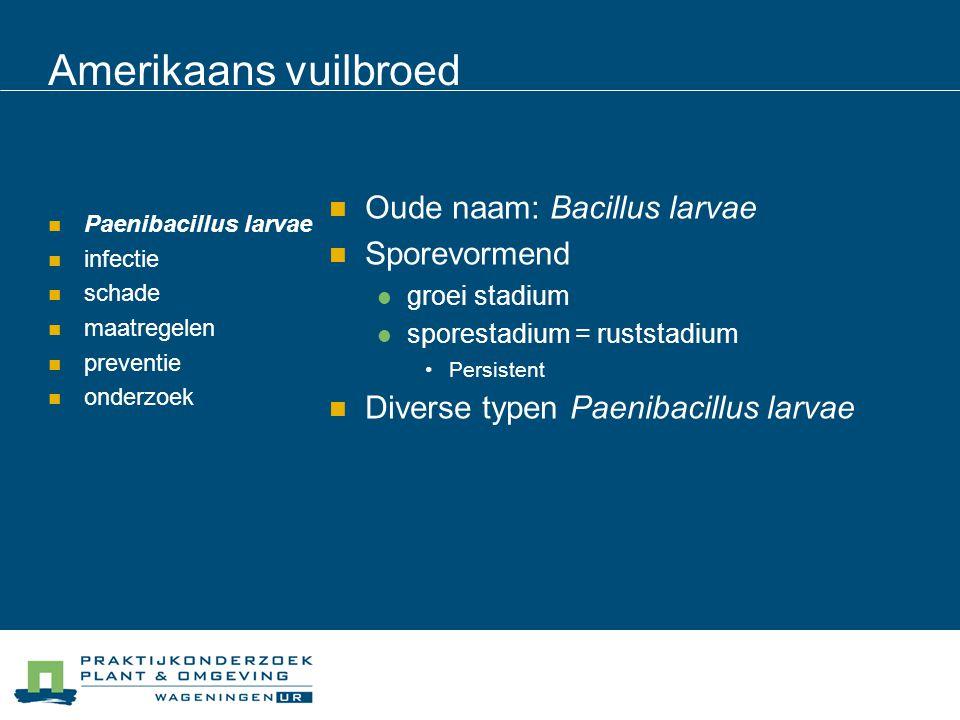 Amerikaans vuilbroed Paenibacillus larvae infectie schade maatregelen preventie onderzoek Alleen sporestadium is infectieus Alleen larven tot 53 uur zijn gevoelig 1 spore genoeg voor infectie LD 50.