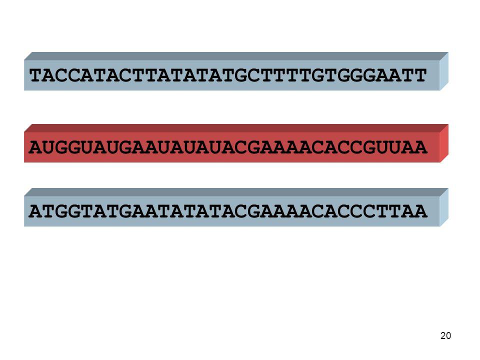 ATGGTATGAATATATACGAAAACACCCTTAA TACCATACTTATATATGCTTTTGTGGGAATT AUGGUAUGAAUAUAUACGAAAACACCGUUAA primair messenger-RNA 21