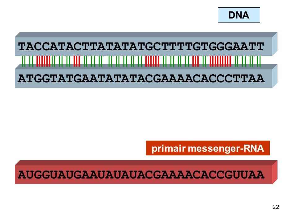 AUGGUAUGAAUAUAUACGAAAACACCGUUAA primair messenger-RNA  Splicing Bepaalde stukken zullen uit dit RNA geknipt worden door bepaalde enzymen.