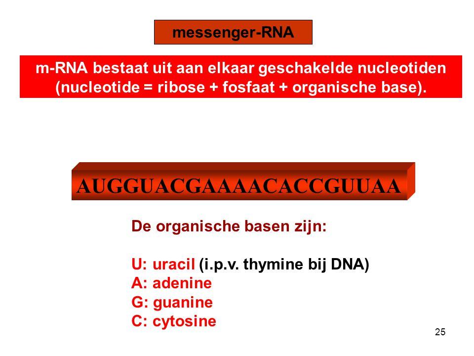 TRANSLATIE Hoe wordt m-RNA omgezet naar eiwit? 26