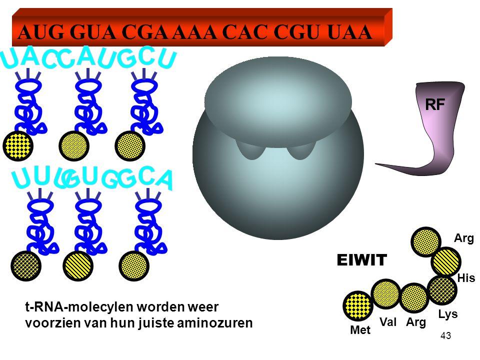 EIWIT Methionine Valine Arginine Lysine Histidine Arginine Methionine kan afgeknipt worden. 44