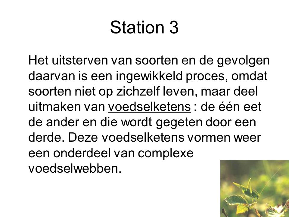 Station 4 Het tropisch regenwoud: –Immense biodiversiteit in een stabiel of een dynamisch milieu ?