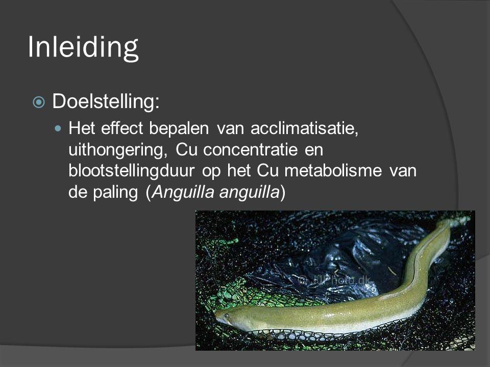 Inleiding  Resultaten: Cu opname verandert niet door acclimatisatie Uithongering heeft geen effect op Cu opname Cu accumulatie in de vis neemt toe met stijgende concentratie en blootstellingduur