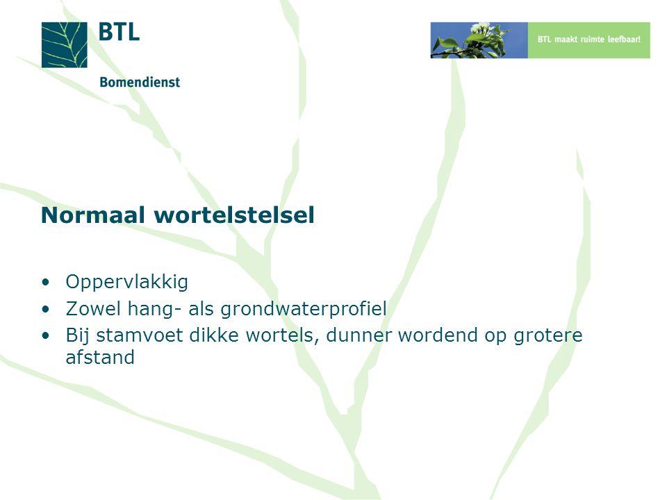 De stadsbodem biedt boomwortels: Hoge verdichting Gebrek aan voedingsstoffen Gebrek aan water Gebrek aan zuurstof Storende lagen Vervuiling