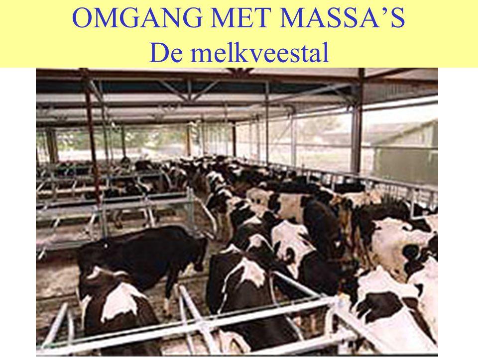 OMGANG MET MASSA'S De melkveestal