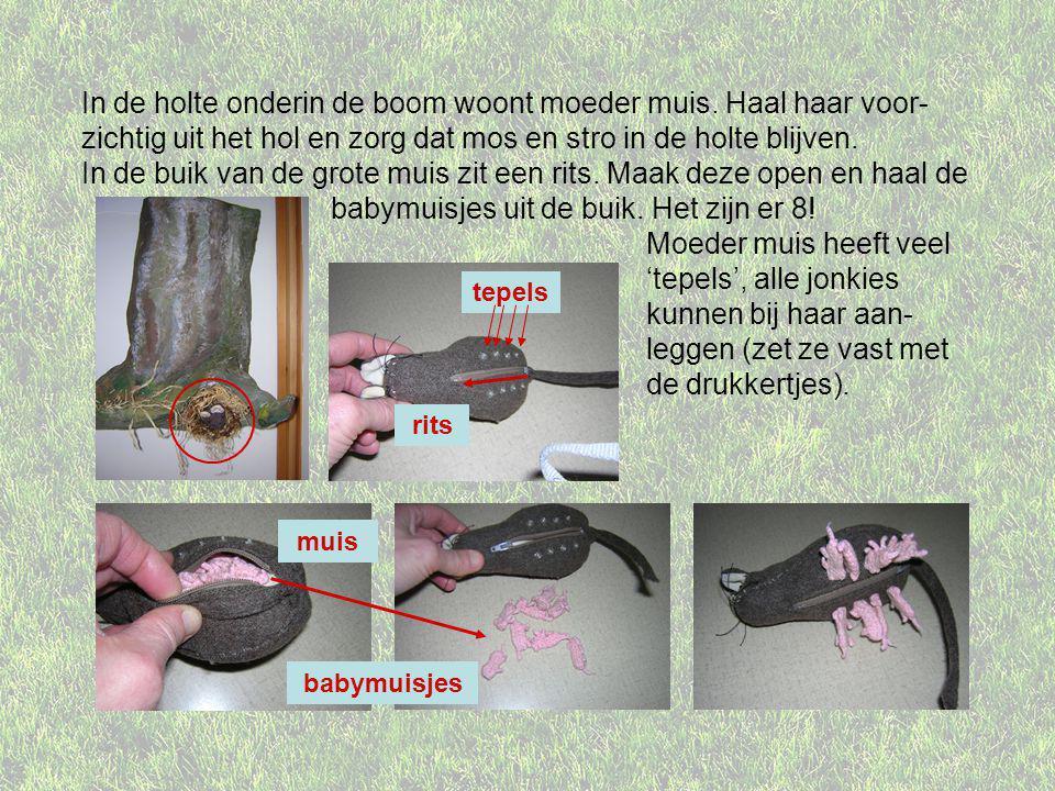 Een muis kan op allerlei plekken een nest maken, en gebruikt daarvoor materiaal uit de buurt.