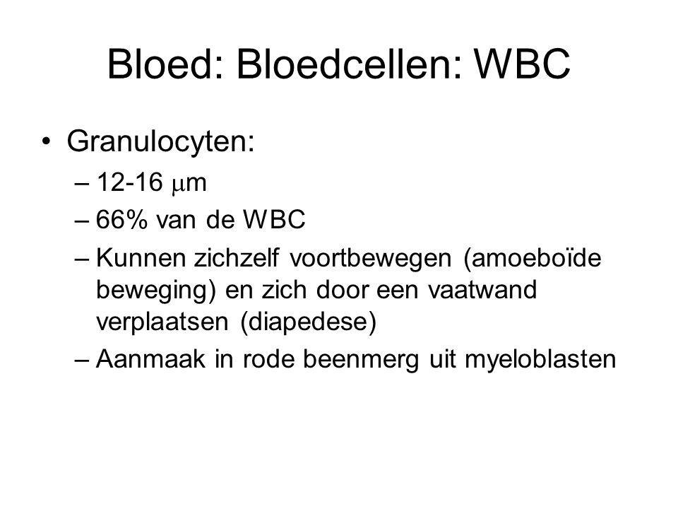 Bloed: Bloedcellen: Bloedplaatjes Bloedplaatjes = trombocyten –150.000-300.000 /  l bloed –Diameter = 2- 4  m –Geen celkern –Aanmaak in beenmerg door uiteenvallen van megakaryocyt –Levensduur 7 – 10 dagen –Functie: bloedstolling (in samenwerking met stollingsfactoren)