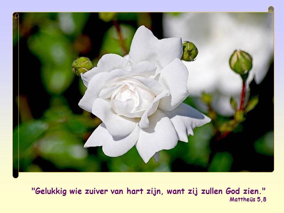 Gelukkig wie zuiver van hart zijn, want zij zullen God zien. Mattheüs 5,8