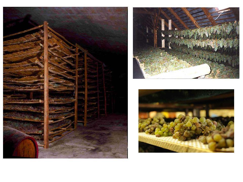 Vin de Paille, Arbois-Pupillin, Désire Petit, 2005 100 % Savagnin 6 weken indroging van de druiven Ondergrond van blauwe mergel Rijping op gebruikte eikenhouten vaten Lutte raisonnée op de wijngaarden