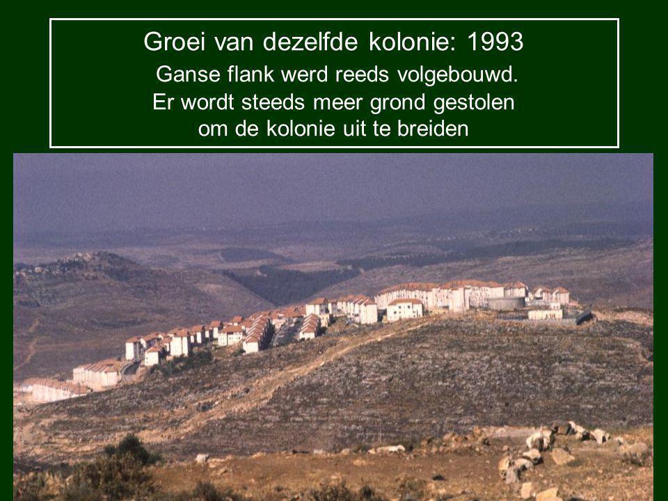 Groei van dezelfde kolonie: 1997 Top van de kolonie geraakt niet meer op één foto en de beide flanken zijn volgebouwd.