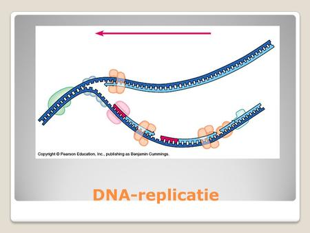 DNA-replicatie.