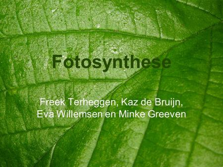 Fotosynthese Freek Terheggen, Kaz de Bruijn, Eva Willemsen en Minke Greeven.