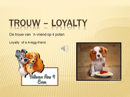 De trouw van 'n vriend op 4 poten Loyalty of a 4-legg-friend.