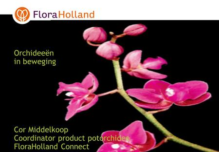 Orchideeën in beweging Cor Middelkoop Coordinator product potorchidee