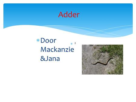 Adder Door Mackanzie &Jana ².