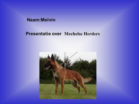 Presentatie over Mechelse Herders