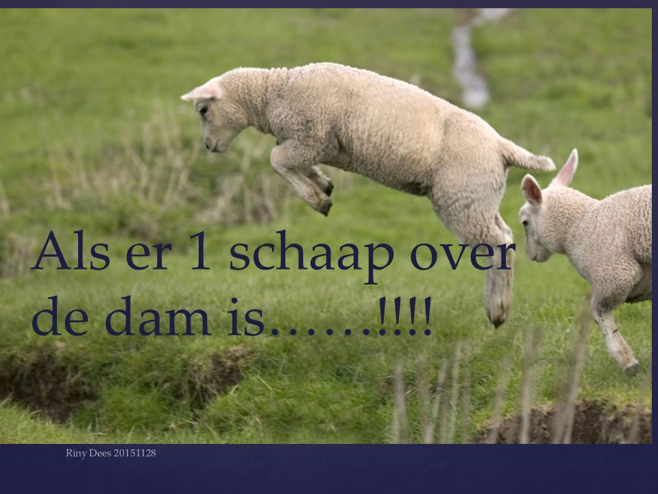 Als er 1 schaap over de dam is……!!!! Riny Dees 20151128