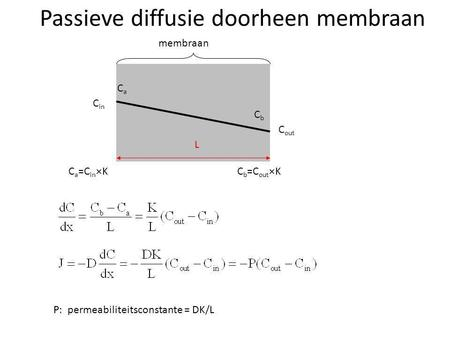 Passieve diffusie doorheen membraan C in C out membraan L P: permeabiliteitsconstante = DK/L C a =C in  K CaCa CbCb C b =C out  K.