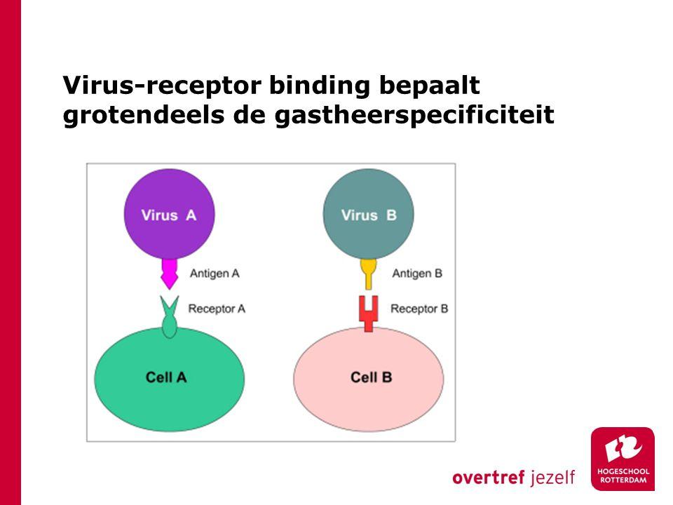 Lytische cyclus (T4) HLO BML