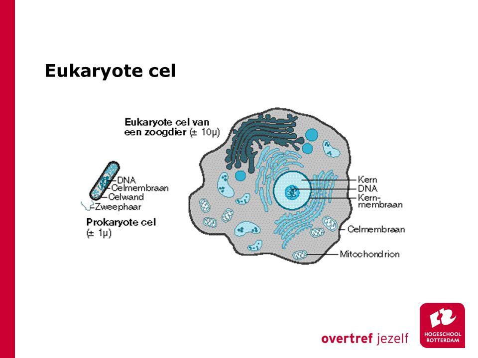 De celwand van schimmels Chitine (een suiker polymeer) geeft stevigheid aan de celwand Chitine komt ook voor in het exoskelet van b.v.