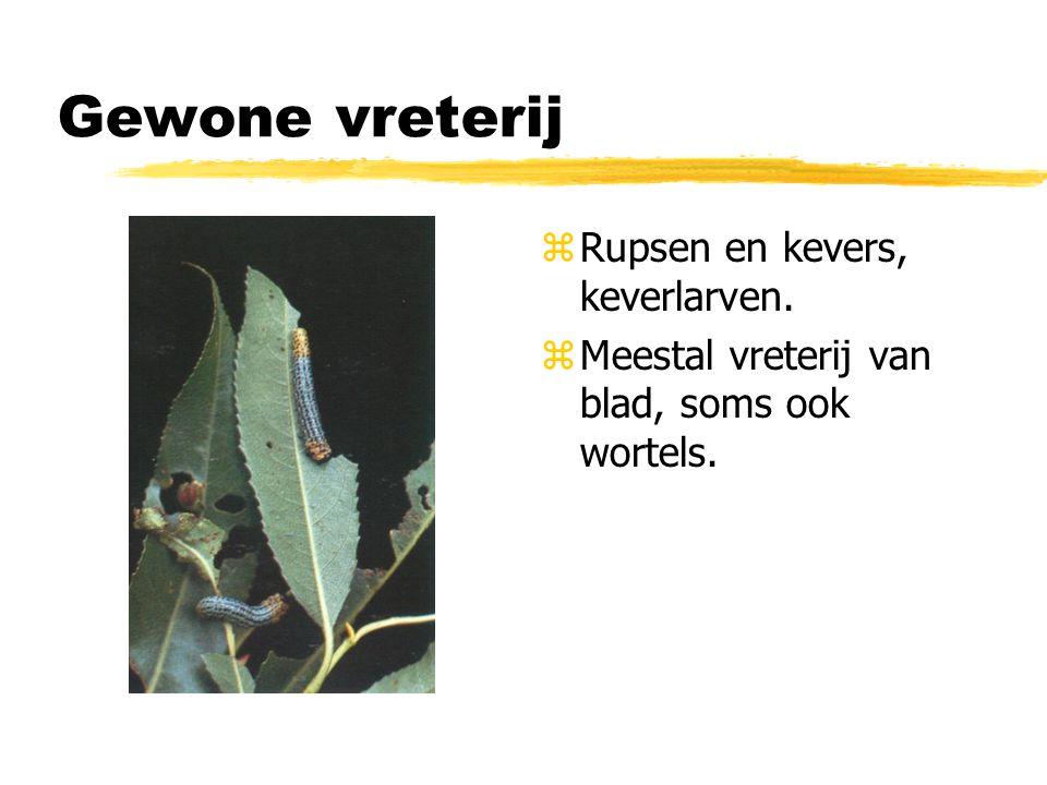 mineren zLarven van sommige insecten zoals mineervliegen vreten het bladmoes weg tussen de opperhuidslagen.