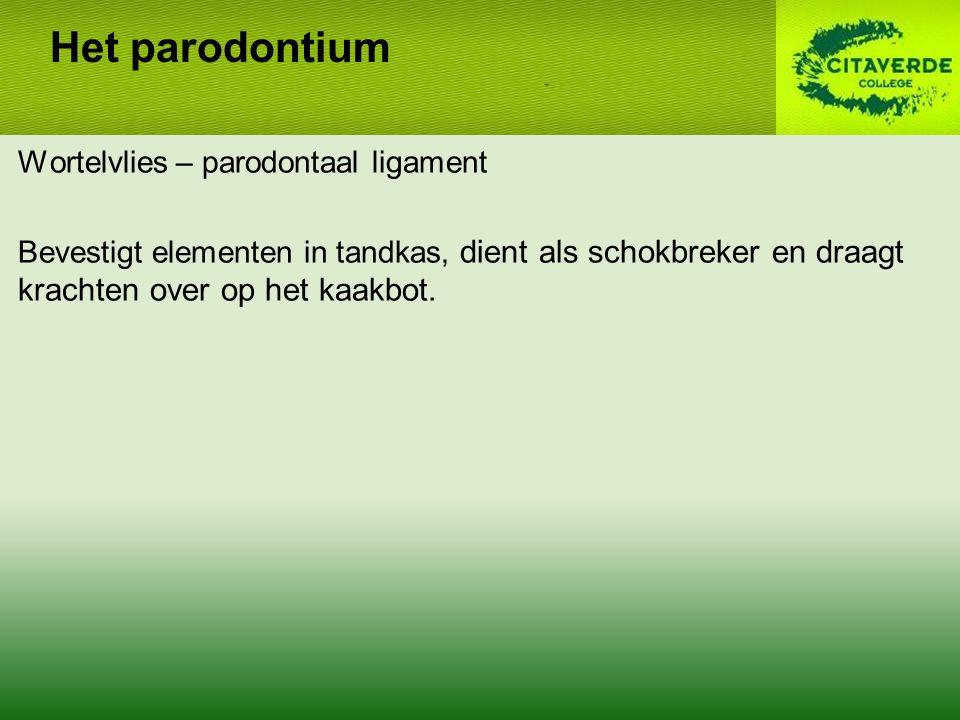 Het parodontium Wortelvlies – parodontaal ligament Bevestigt elementen in tandkas, dient als schokbreker en draagt krachten over op het kaakbot.