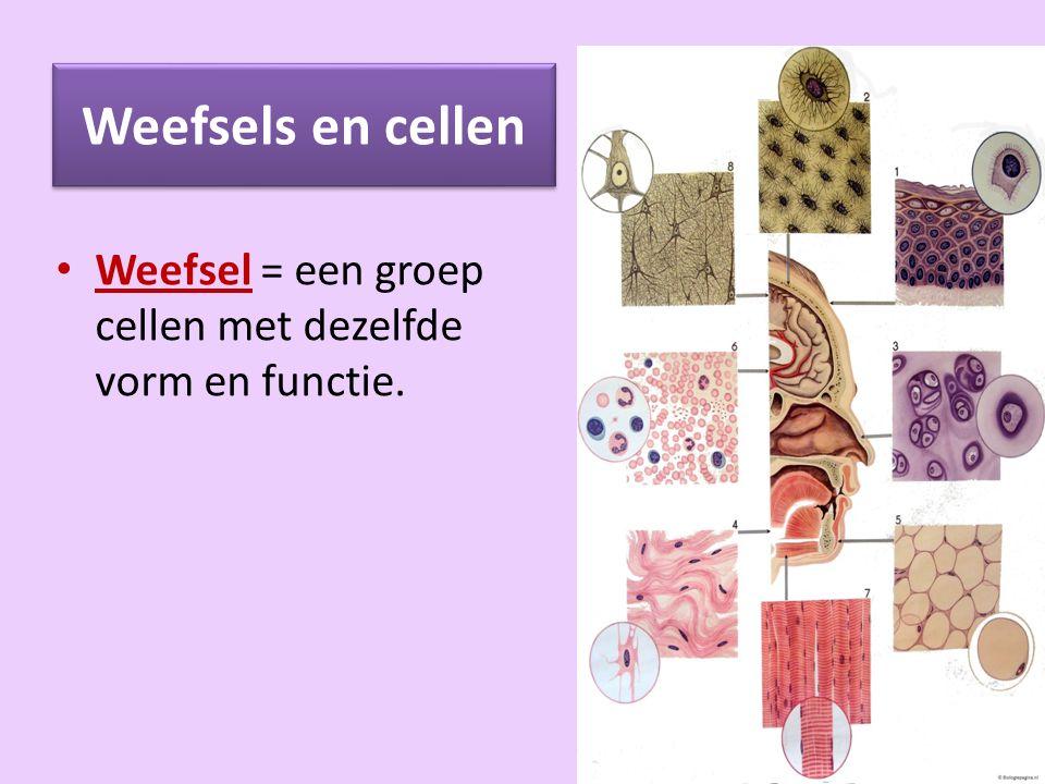 Weefsels en cellen Weefsel = een groep cellen met dezelfde vorm en functie.