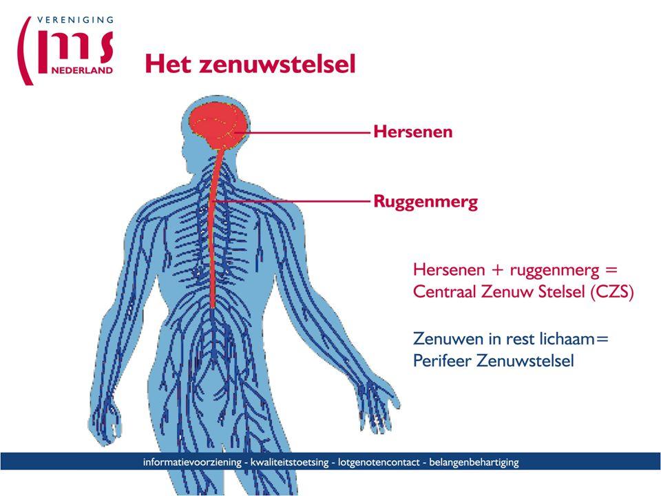 Korte inleiding over het zenuwstelsel en wat MS met je zenuwen doet