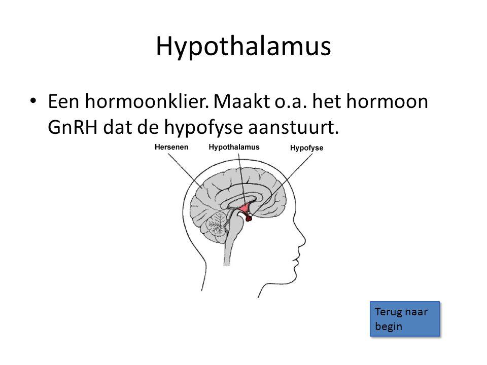 Hypothalamus Een hormoonklier. Maakt o.a. het hormoon GnRH dat de hypofyse aanstuurt.