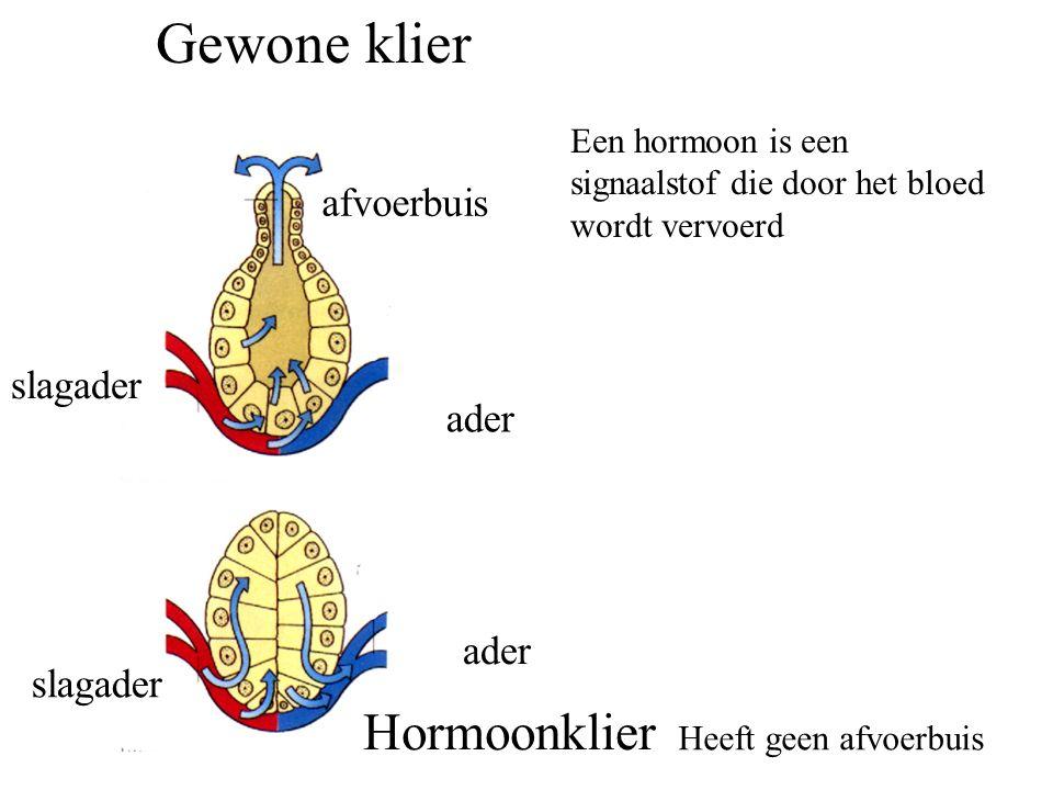 Gewone klier Hormoonklier afvoerbuis slagader ader ader slagader